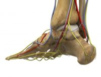 Foot and Ankle Nerve Pain